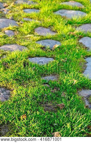 Grass, lawn and stones. Grey stones and bright green grass between them, nature grass lawn background, focus at the foreground, shallow DOF