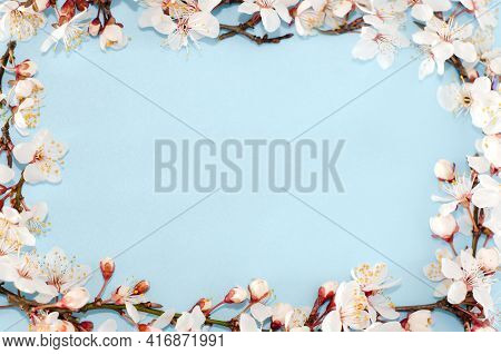 Frame From Spring Sakura Flowers, Cherry Blossoms On A Blue Background. Top View, Flat Lay. Copy Spa