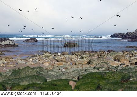 Rocky Area On The Shore Of The Cantabrian Sea In Spain, Flock Of Birds Flying Over The Sea