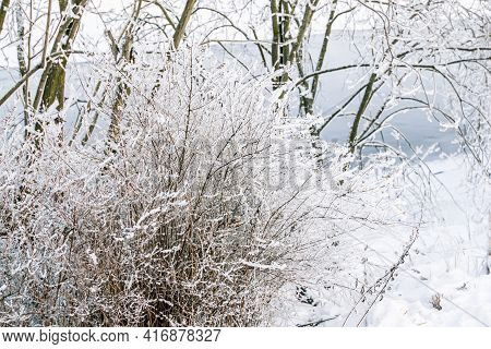 Bush In White Fluffy Snow, Trees And Light Blue River Flows Background. Winter Bright Day. Shore. Ru
