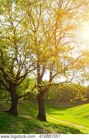 Spring landscape.Green spring park trees and sunset spring light shining through the spring branches.Sunny spring nature landscape view,spring park,spring trees,spring nature view,spring park landscape