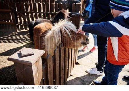 Little Boy Caresses A Pony Foal At The Zoo. Love And Animal Protection Concept