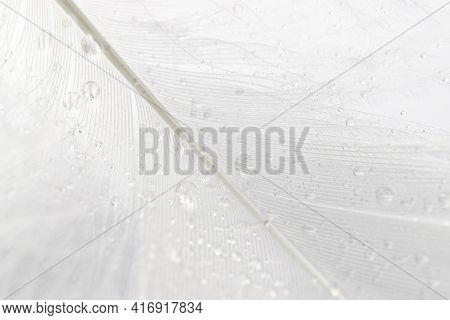 Feather Abstract. Nature Bird Feather Texture Closeup On White Background In Macro Photography, Soft