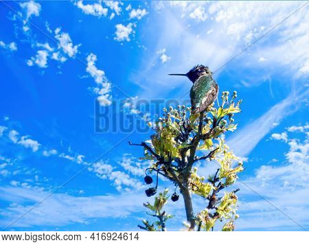 Hummingbird Perched On A Branch