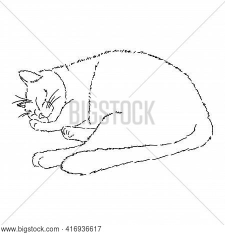 Drawing Of A Cute Sleeping Cat With His Paw Under His Cheek. Black And White Illustration Of An Anim