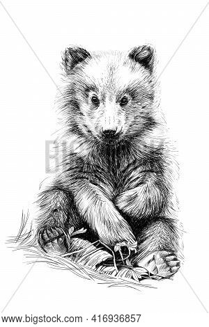 Hand Drawn Baby Bear Cub, Sketch Graphics Monochrome Illustration On White Background (originals, No