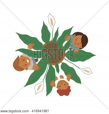 Spathiphyllum Plant With Three Flowers Top View And Children Among The Leaves. Spathiphyllum In A Po