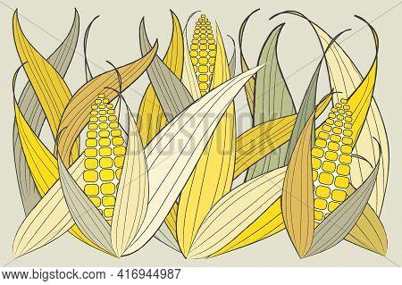 Beautiful Group Of Fresh Yellow Corn Plants. Corn Field Background Vector Illustration