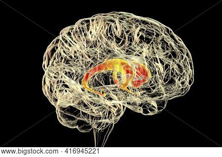 Caudate Nuclei Highlighted In Human Brain, 3d Illustration. The Caudate Nucleus Is A Component Of Th
