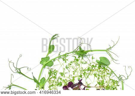 Micro Green Plant Sprouts Isolated On A White Background. Radish Microselen. Assortment Of Micro-gre