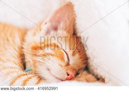 Cute Little Ginger Kitten In The Collar Sleeps On White Soft Cat Bedding