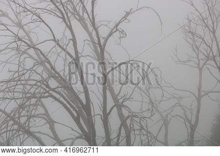 Dormant Leafless Tree During Winter Surrounded By Fog During A Rain Storm Taken At A Dark Damp Fores