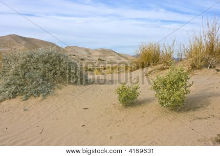 Kelso Dunes in the Mojave National Preserve California. Various bushes growing on a sand dune. Tracks of small animals. Large sand dunes visible in the background. Blue sky with stratus clouds. poster