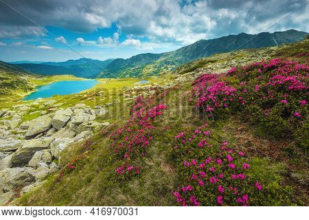Majestic Place With Season Specific Pink Rhododendron Flowers On The Slopes And Picturesque Lake In
