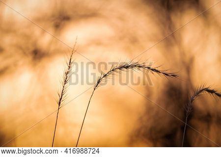 Close up shot of tall grass against sunset