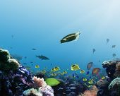 underwater coral reef scene depicts fish jellies and a turtle. poster
