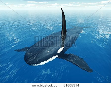 Computer generated 3D illustration with a Killer Whale poster