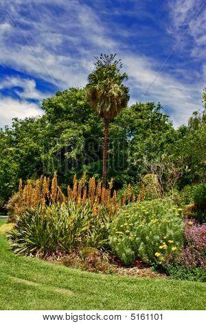 Vibrant Garden