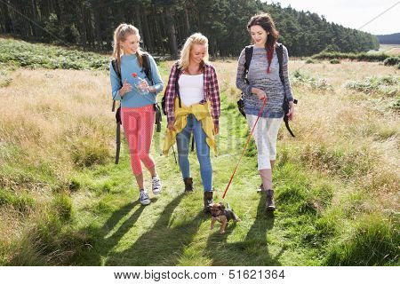 Group Of Teenage Girls Hiking In Countryside With Dog
