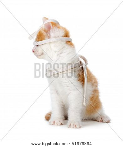 Cute Orange And White Kitten Playing On A White Background.