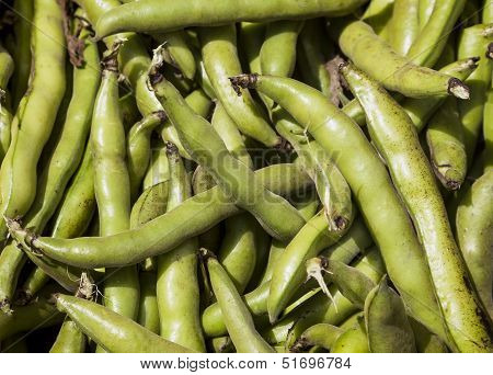 Fresh Fava Or Broad Bean Background