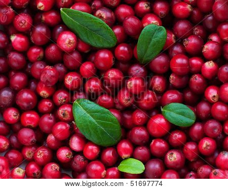 Background Of Cranberry