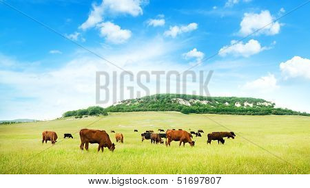 Cow On Green Meadow.