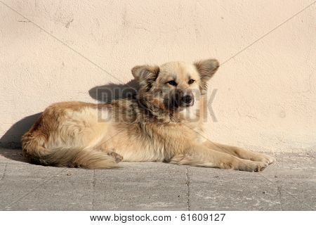 Dog Lying Next to a Wall