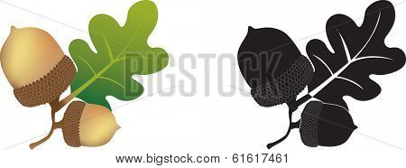 colour and black and white illustration of an acorn and oak leaves