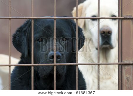 Lonely Dogs