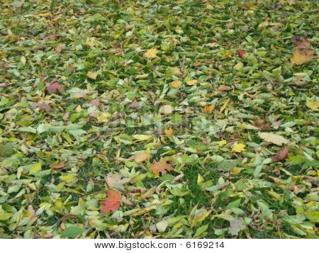 Leafs River On The Grass