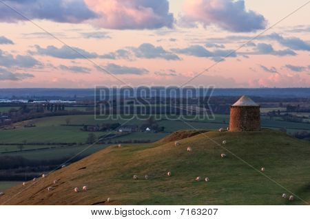 Country Park With Sheep Grazing At Sunset