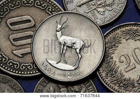 Coins of the United Arab Emirates. Sand Gazelle (Gazella subgutturosa marica) depicted in an UAE twenty five fils coin.