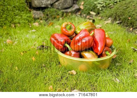 Bowl Full Of Red Pepper On Grass