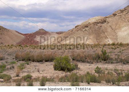 The desert vegetation of the Cainville badlands