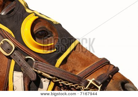 Close up face of race horse with bridle and hood on white background with copy space poster