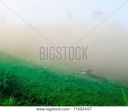Cottage In The Mist On Hill