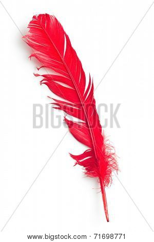 red feather on white background