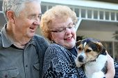 An upbeat joyful elderly man and woman couple in love at home with dog poster