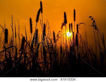 Golden Nights On The Prairie