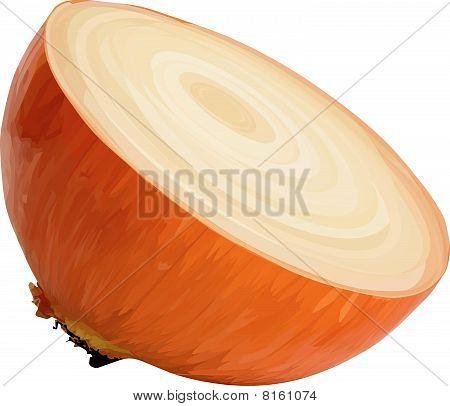 Vector half of the onion.