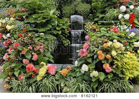 Begonias In The Greenhouse