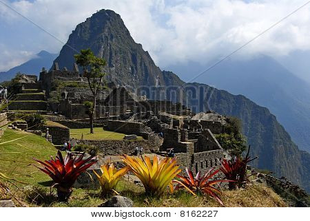 Flowers Of Machu Picchu