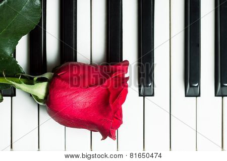 Red Rose On Piano Keyboard. Abstract Music Background