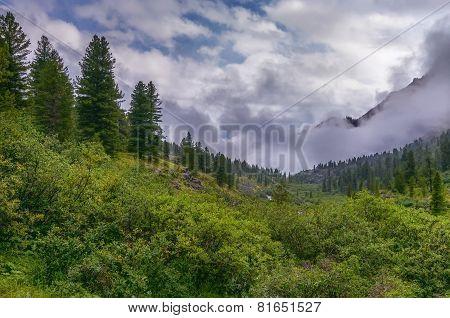Dense Bushland In A Mountain Valley