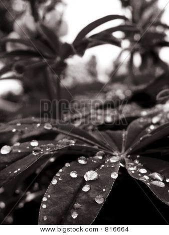 waterdrops on leaves