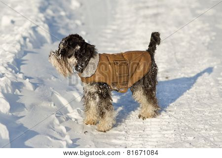 Dog In Jacket On Snow