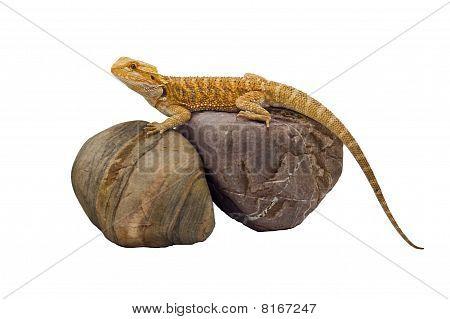 Dragon & Rocks