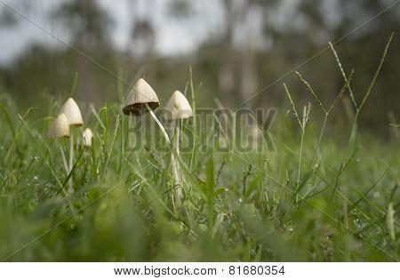 Small Mushrooms After Summer Rain