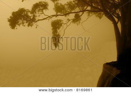 Foggy Abyss
